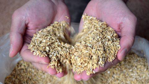 Häuser aus Reis bauen
