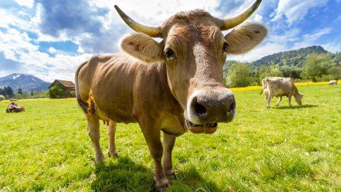 Des Österreichers Lieblinge ohne Fleisch