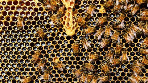 Nachhaltige Produkte – aus Bienenwachs