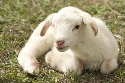 Großer Erfolg für Tierschutzvolksbegehren