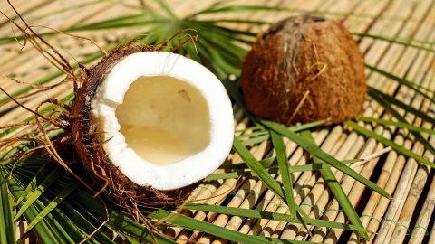 Selbstverpflichtung zu nachhaltigem Kokosnussabbau