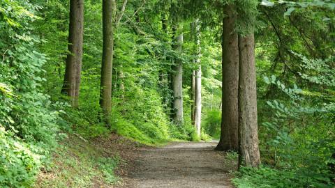 Wald und Holz als Wundermittel gegen Klimakrise