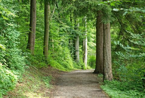 WWF: Kehrtwende in Waldbewirtschaftung notwendig