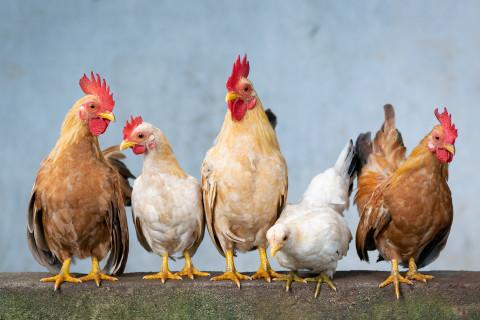 Eintragungswoche für das Tierschutzvolksbegehren startet
