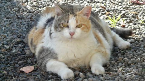 Fat Cat Day: ATX-CEOs haben genug gearbeitet