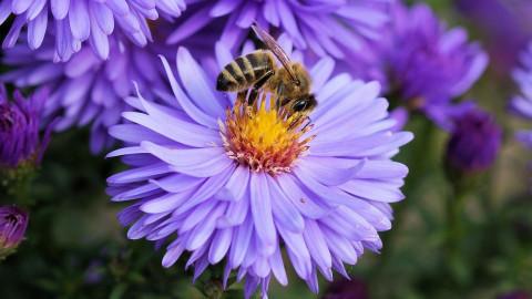 Nachhaltige Landbewirtschaftung ist Grundlage der Artenvielfalt