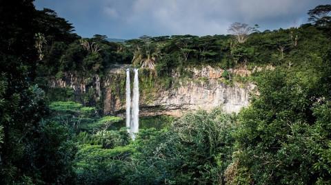 Tag des Regenwaldes: WWF-Analyse zeigt Probleme auf