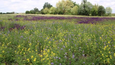 Bio Austria-Höfe nehmen besondere Verantwortung für Biodiversität wahr
